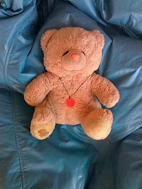 популярный Тедди